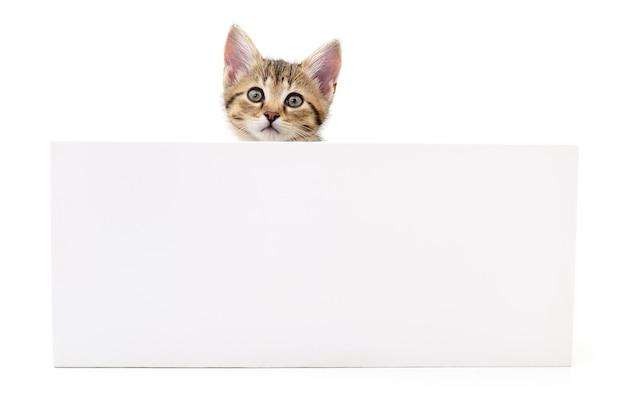 Kätzchen hängen über leerem posterboard, fügen sie die nachricht hinzu.