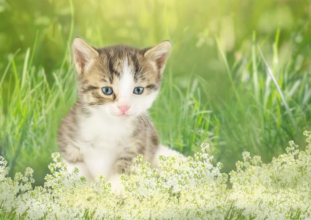 Kätzchen im garten mit blumen auf hintergrund