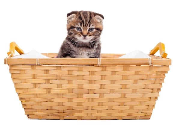 Kätzchen im korb. nettes schottisches faltkätzchen, das am korb und vor weißem hintergrund sitzt
