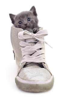 Kätzchen im stiefel isoliert