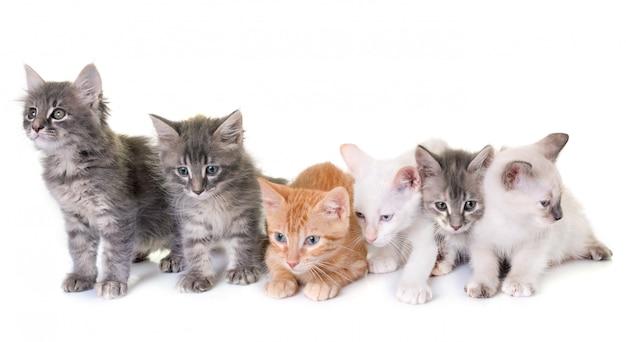 Kätzchen im studio