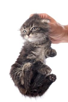 Kätzchen in der hand