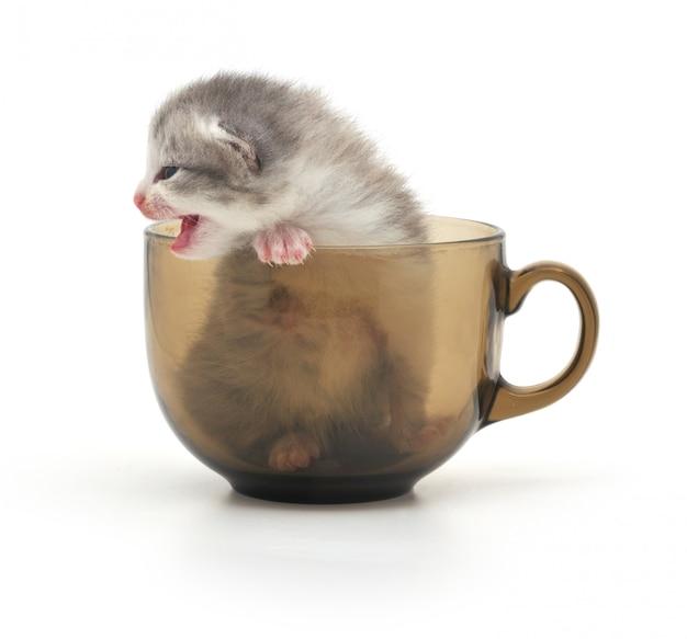 Kätzchen in der tasse isoliert