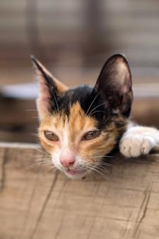 Kätzchen katze