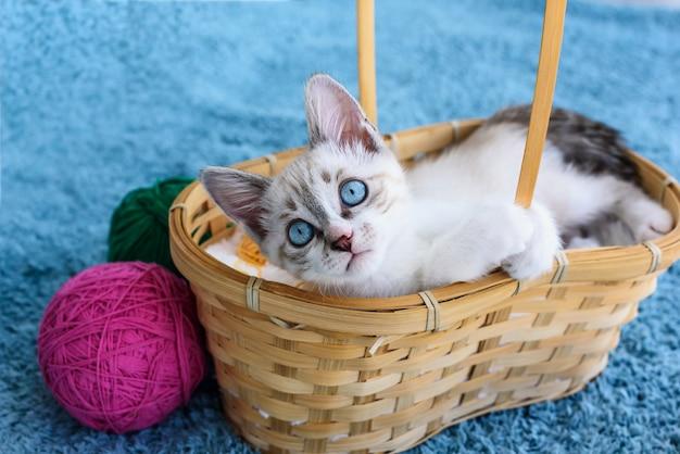 Kätzchen mit blauen augen nahe kugeln und korb auf der blauen oberfläche