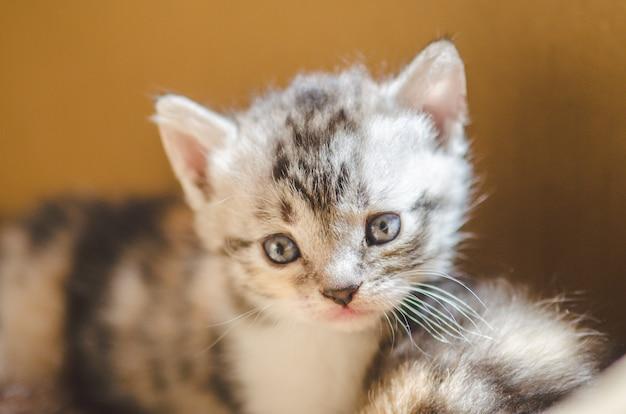 Kätzchen mit drei farben gegen einen braunen hintergrund