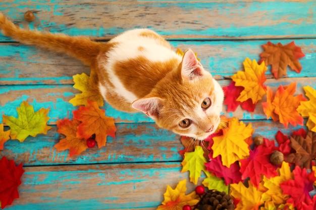 Kätzchen schauen oben und sitzen auf ahornblättern im herbst