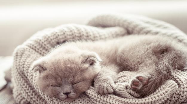 Kätzchen schläft auf einem pullover