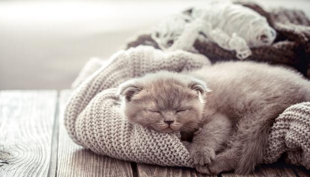 Kätzchen schläft auf einem pullover Premium Fotos