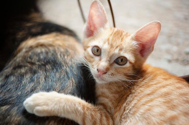 Kätzchen schläft hinter ihrer mutter