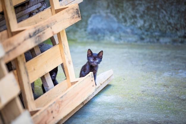 Kätzchen spielen im hinterhof des hauses