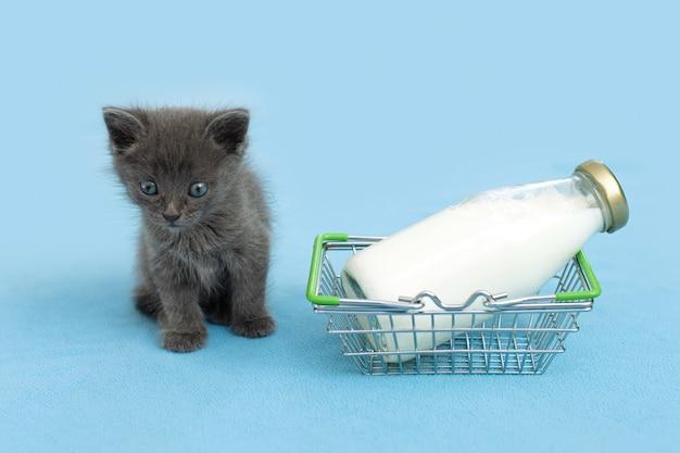 Kätzchen und eine flasche milch. graue katze mit futter im einkaufswagen.