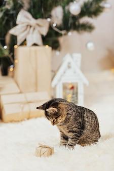 Kätzchen und kleine geschenkbox.