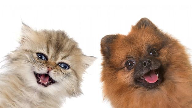 Kätzchen und welpe