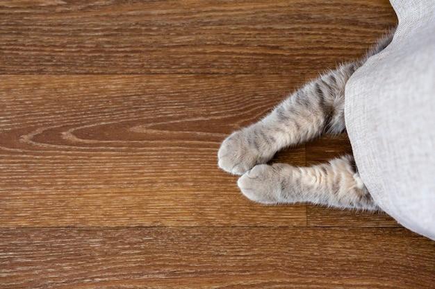 Kätzchen versteckte sich hinter vorhang. katzenpfoten ragen unter dem vorhang hervor. platz kopieren, platz für text. von oben betrachten.