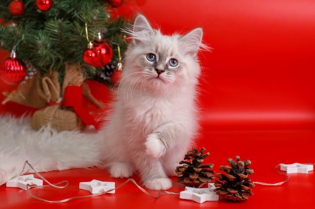 Kätzchen zu hause in der weihnachtszeit