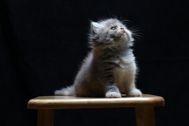 Kätzchenkatze lokalisiert auf schwarzem hintergrund