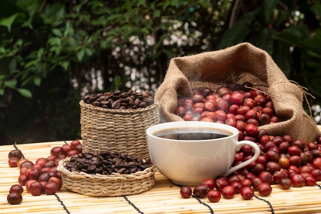 Kaffee in der kaffeefarm