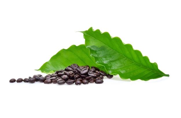 Kaffeebohne mit kaffeeblatt isoliert auf weißem hintergrund