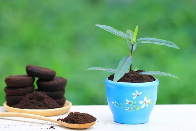 Kaffeerückstände werden auf den baum aufgetragen und sind ein natürlicher dünger