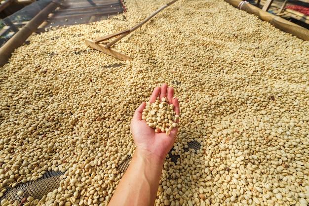 Kaffeeverarbeitung, pergamentkaffee trocken im kaffeehaus