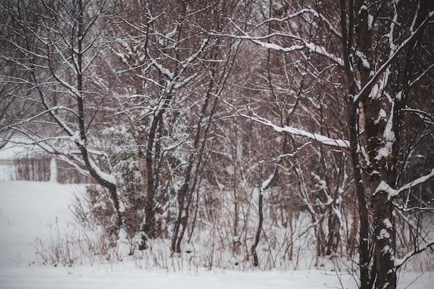 Kahle bäume auf schneebedecktem boden