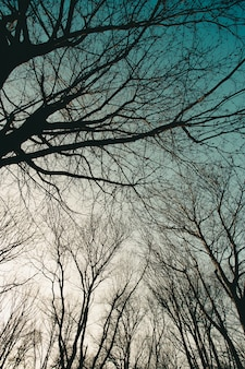 Kahle bäume silhouetten gegen himmel