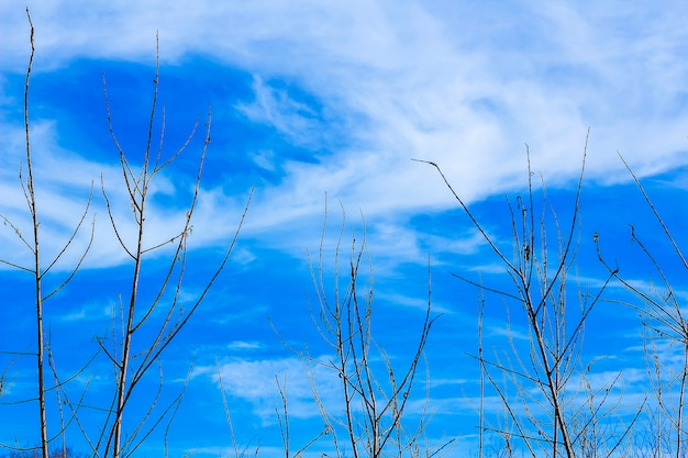 Kahle bäume und zweige gegen blauen himmel