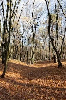 Kahle bäume wachsen im herbstpark am ende des herbstes, bewölkte neblige straße, kahle laubbäume, camping