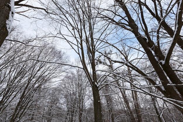 Kahle laubbäume im schnee im winter, schöne winternatur nach schneefall und frost, laubbäume verschiedener rassen nach schneefall