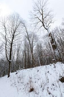 Kahle laubbäume im winter im schnee