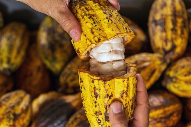 Kakaobohnen und kakaohülse auf einer holzoberfläche.
