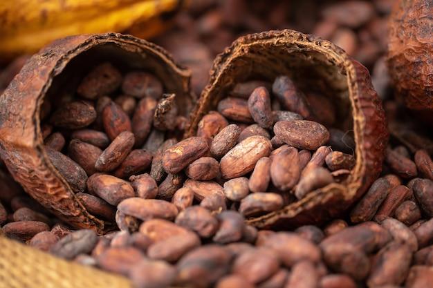 Kakaobohnen und kakaohülse, die heraus in einen leinwandsack gießen
