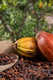 Kakaofrüchte und rohe kakaobohnen mit defokussierter kakaoplantage im hintergrund.