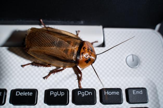 Kakerlake auf tastatur laptop oder notebook, nahaufnahme von oben.