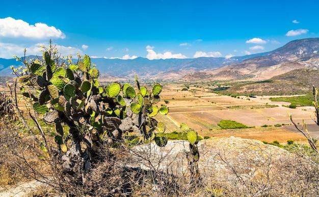 Kakteen an der archäologischen stätte yagul im mexikanischen bundesstaat oaxaca