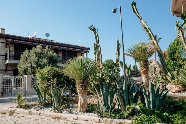 Kakteen und palmen wachsen in einem bett in der nähe eines hauses im truthahn-konzept landschaftsdesign und exterieur