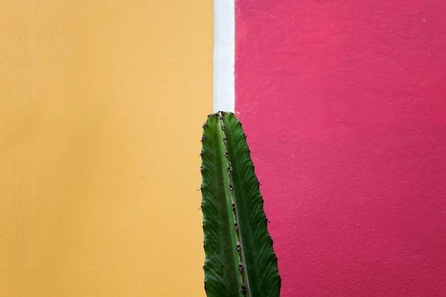 Kaktus an der wand