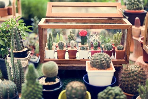 Kaktus-anzeigen-natur-anlagen