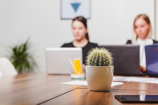 Kaktus auf bürotisch