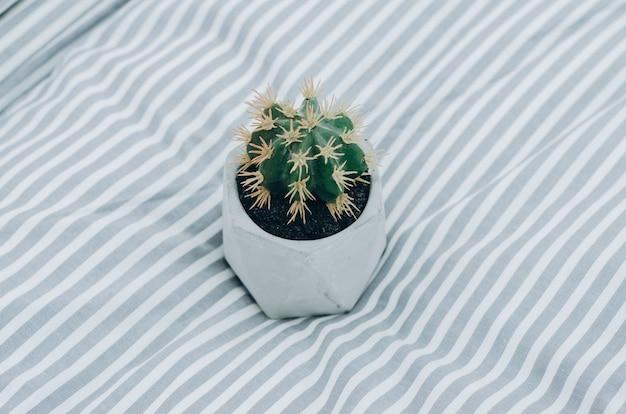 Kaktus auf decke auf dem bett zu hause