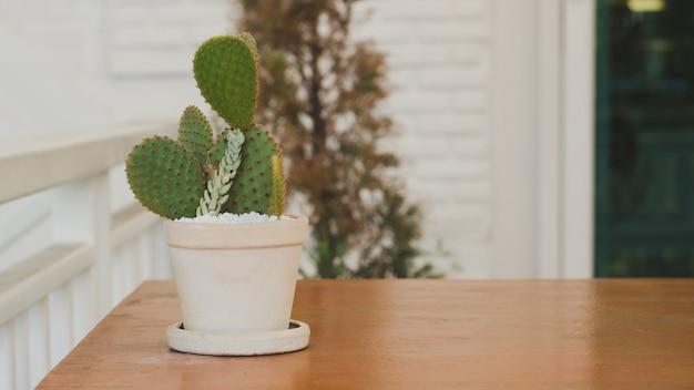 Kaktus auf dem tisch
