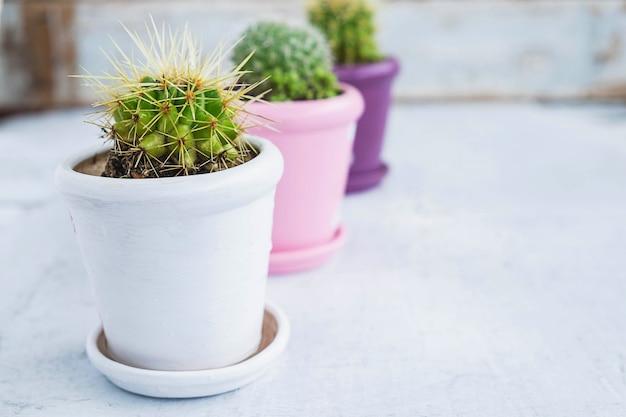 Kaktus auf einem holztisch