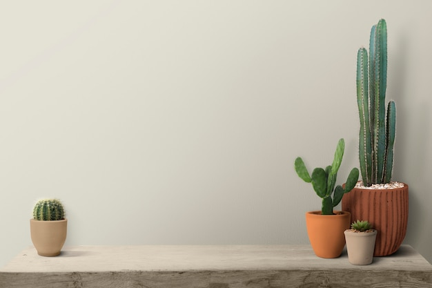 Kaktus auf einem regal durch einen leeren wandhintergrund