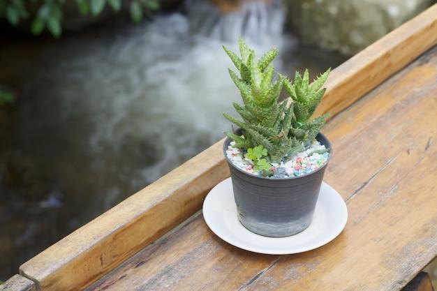Kaktus auf hölzerner tabelle