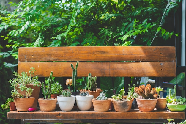 Kaktus auf holzstuhl im weinleseartgarten, film getont