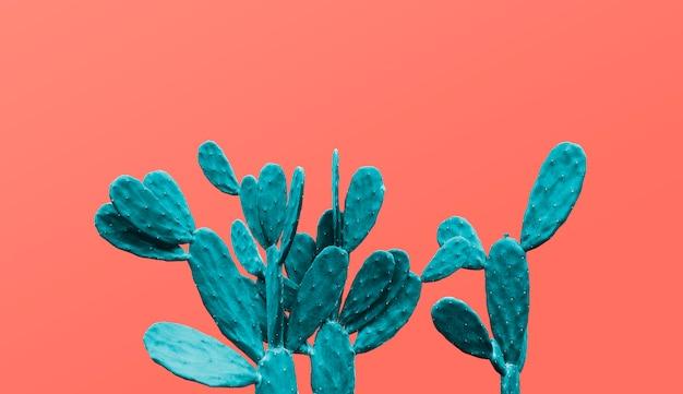 Kaktus auf minimalem sommer des lebenden korallenroten hintergrundes