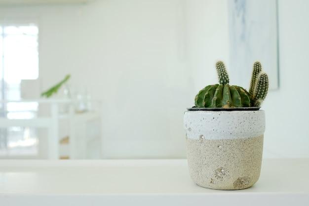 Kaktus auf tabelle mit kopienraumhintergrund, saftiger tropischer houseplant modisch