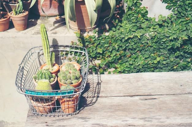 Kaktus blumentopf im café