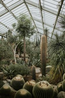 Kaktus-gewächshaus-retro-filmkorn, in kew garden, london
